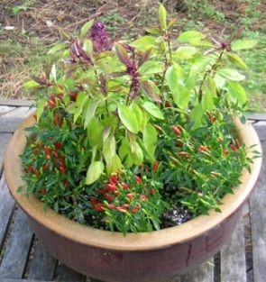 patio pepper pot